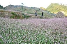 La beauté du plateau calcaire de Dông Van, premier parc géologique du Vietnam