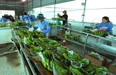 Vietnam et Pays-Bas coopéreront dans l'application et le développement des technologies post-récolte