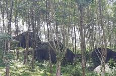 Aide allemande pour la conservation de la biodiversité forestière à Thua Thien-Huê