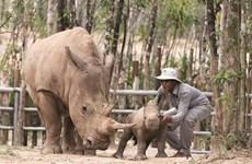 Vinpearl Safari Phu Quôc, le royaume des animaux sauvages