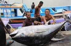 L'Indonésie prévoit de construire des marchés internationaux des fruits de mer