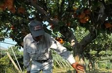 Singapour lève l'interdiction d'importer des produits alimentaires en provenance de Fukushima