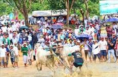 An Giang : valorisation du festival des courses de bœuf Bay Nui