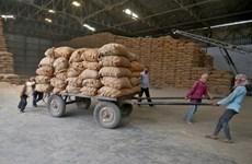 La Malaisie importe 100.000 tonnes de riz de l'Inde