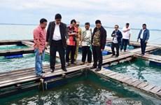 Indonésie: Tokyo et Séoul aident à repenser la conception des centres de pêche