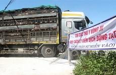 Importation d'un lot de 500 cochons vivants de Thaïlande