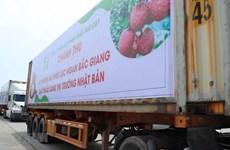 Le Vietnam exportera 200 tonnes de litchis vers le Japon cette année