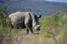 Journée mondiale du rhinocéros : sensibiliser le public à la conservation des rhinocéros