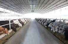 Le groupe Hoa Phat va accélérer l'approvisionnement de la viande de bœuf australienne au Vietnam