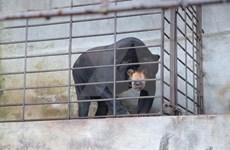 521 animaux en danger sauvés en 2018