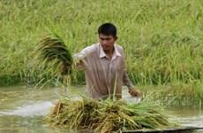 Le PM cambodgien appelle à une diversification du marché à l'export du riz
