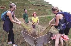 """Une Tày ambitieuse pour son projet """"Agriculture verte"""""""