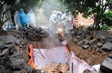 Création du Comité national de pilotage de prévention et de lutte contre la peste porcine africaine