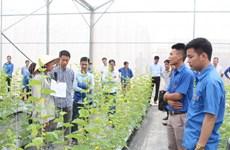 Bac Giang: transfert de techniques de production agricole high-tech aux jeunes locaux