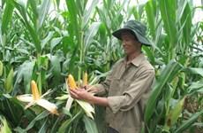 Bayer assiste le Vietnam pour développer l'agriculture high-tech