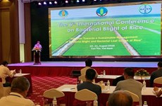 Riz : une conférence internationale sur la maladie bactérienne des feuilles à Can Tho