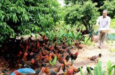 Bac Giang s'intéresse à l'essor socio-économique des ethnies minoritaires
