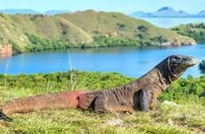 L'Indonésie annule son plan de fermer son île de Komodo