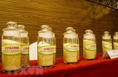 Les entreprises de Hong Kong cherchent à importer du riz de Can Tho