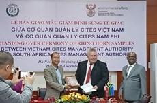 Vietnam : livraison des cornes de rhinocéros saisis à l'aéroport Noi Bai pour l'Afrique du Sud