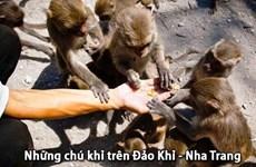 Île aux singes – destination intéressante pour visiter la belle ville de Nha Trang