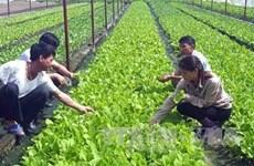 Des entreprises japonaises souhaitent investir dans l'agriculture de haute technologie à Bac Lieu