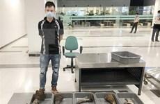 Can Tho : près de 30 kg soupçonnés de corne de rhinocéros saisis