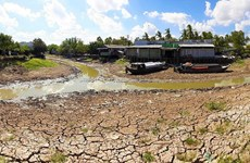 La province de Ca Mau lourdement touchée par la sécheresse