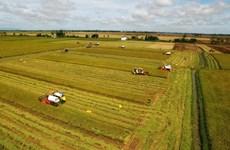 Agriculture : le Vietnam ambitionne de figurer parmi les 15 pays les plus développés du monde