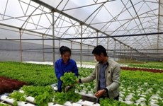 Résilience au changement climatique : plus de 80 milliards de dôngs pour soutenir des agriculteurs