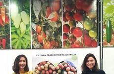 """Le premier lot de litchi """"U hông"""" du Vietnam est arrivé en Australie"""