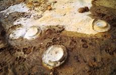 Découverte de  traces d'ammonites fossilisées datées environ 200 millions d'années à Gia Lai