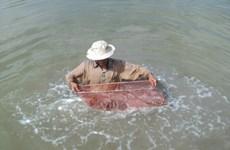 Etude des espèces de coquillages venimeux à Phu Quoc