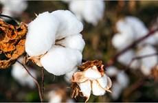 L'Inde cherche à accroître ses exportations de coton vers le Vietnam