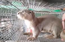 Commerce d'animaux sauvages: le Vietnam en faveur de la fermeture des marchés illégaux
