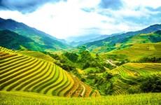 Les rizières en terrasse de Mù Cang Chai : un des paysages les plus pittoresques du Nord-Ouest