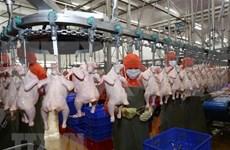 La viande de poulet du Vietnam bientôt exportée à Singapour et Hongkong (Chine)