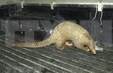 Mise en route de la campagne d'appeler à arrêter la consommation des animaux sauvages
