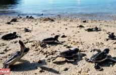 """Côn Dao, l'archipel le plus """"mythique"""" et """"séduisant"""" du monde"""