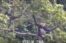 Harmonie entre les moyens d'existence humains et les habitats d'animaux rares