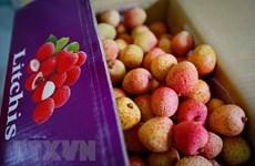Cent tonnes de litchis devraient bientôt être exportées vers l'Australie