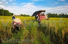 La Banque mondiale prête à soutenir de nouveaux projets agricoles au Vietnam