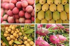 Le Vietnam et l'Argentine renforcent leur coopération dans le commerce agricole