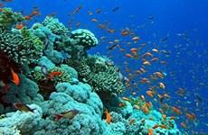 Protéger les écosystèmes des récifs coralliens dans la baie d'Ha Long