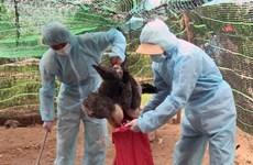 Approbation du Plan national de prévention et de lutte contre la grippe aviaire