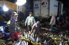 Hausse des exportations du thon vers l'Italie
