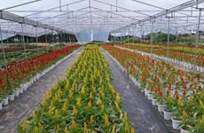 À la découverte des villages horticoles à l'approche du Têt
