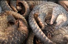 Proposer des actions pour répondre aux menaces du commerce illégal d'espèces sauvages