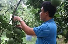 Des opportunités à saisir pour les exportateurs de fruits