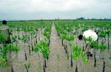 Le GCF aide Quang Nam à renforcer sa résilience au changement climatiquem